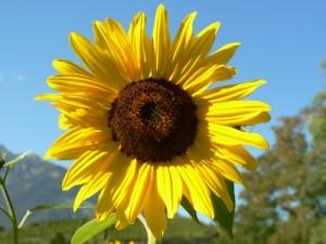 Solaranlage: Meine Renditeberechnung